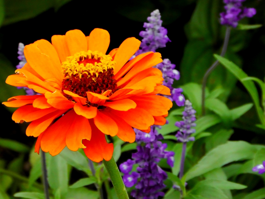 BlumeOrange.FB